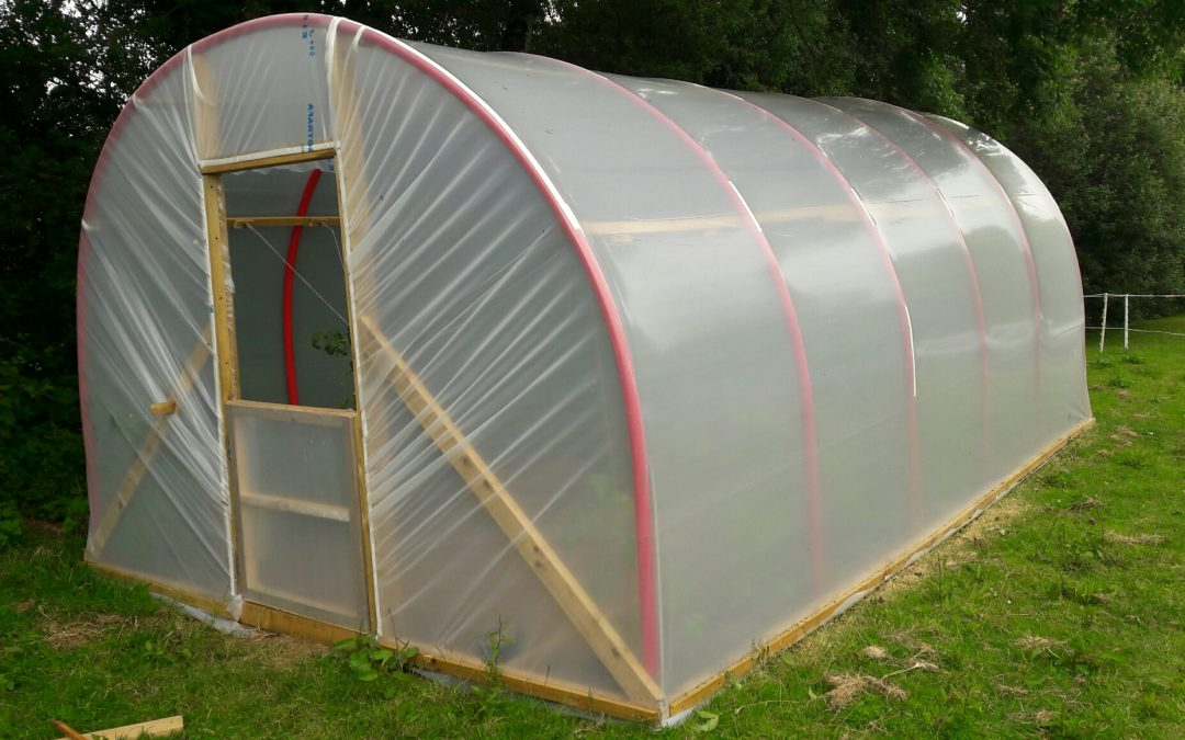 Update on our polytunnel – we're growing!